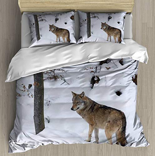 Duvet Cover European Gray Wolves Canis Lupus in The Snow Wolf huntings and Bedding Set Modern Style Print Set with Zipper Closure 3 Pcs Comfortable Home Soft Luxurious Bohemia Queen Size